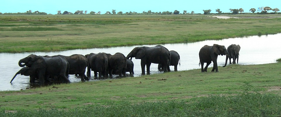 botswana_africa-adventure-elephants-chobe-river.jpg