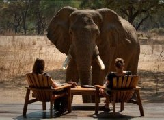 Tierbeobachtung in Sambia mit Cross Country Air Safaris
