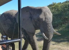 Hopewell Private Game Reserve, Safaris in Colchester
