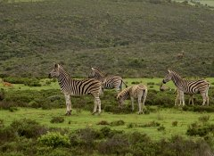 Tierbeobachtung im Indalu Game Reserve in Mossel Bay