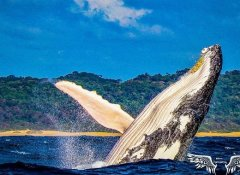Walbeobachtung mit St Lucia Tours-Advantage & Charters